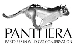 Panthera - partners in wild cat conservation